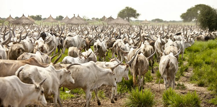 Image result for Ganduje inaugurates RUGA Committee, invites herders to Kano